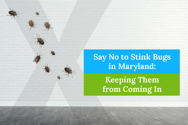 Say No to Stink Bugs in Maryland: Keeping Them from Coming In
