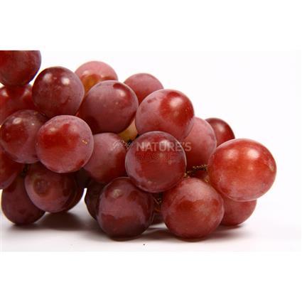 [Image: grapes-f341c972-bc85-4b0d-8309-6bdaa4fd0cad-425x425.jpg]