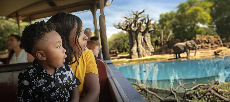 Lions on the Kilimanjaro Safaris at Disney's Animal Kingdom