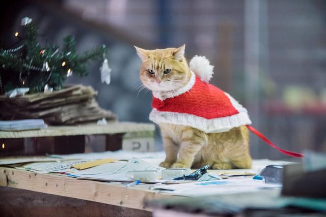 最紅街貓重返片場超靈性  《再見街貓BOB》首映會眾星雲集 001-BOB-Bob-4