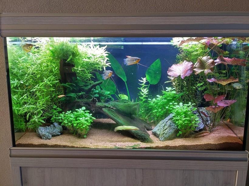 https://i.ibb.co/brmGSch/aquarium-kopie.jpg