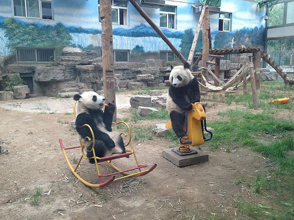 Медведи, такие медведи-31