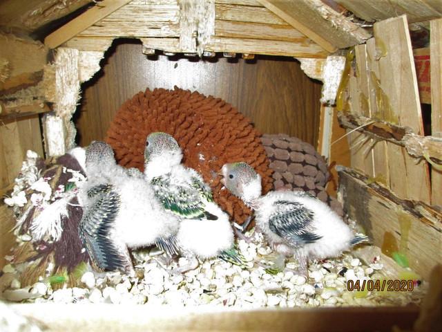 birdies1