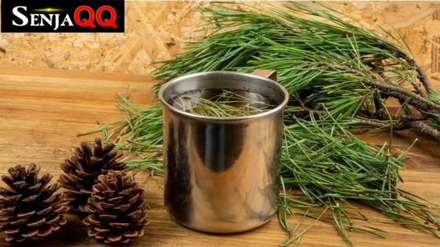 9 Manfaat Daun Pinus yang Baik untuk Kesehatan