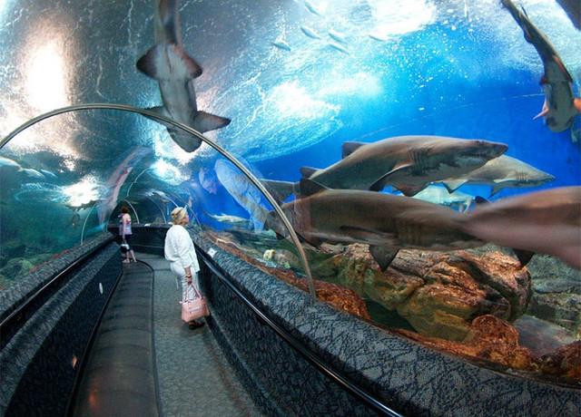 underwater-world-singapore-1024x736