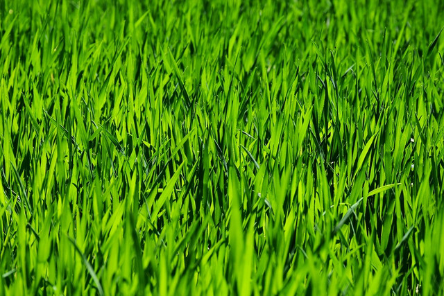 grass-3336700-960-720