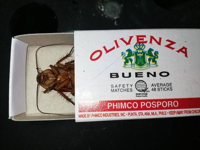 entierro-de-la-cucaracha