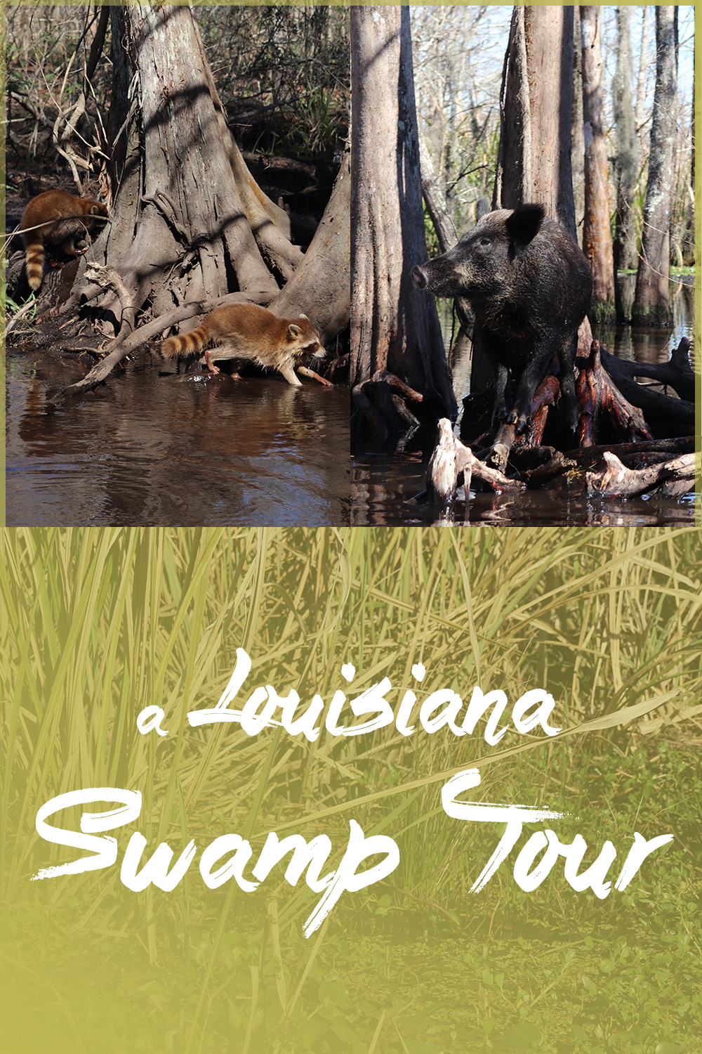 A Louisiana Swamp Tour