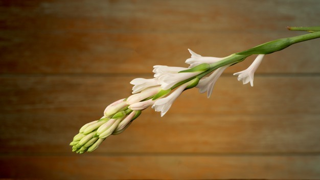 Benefits of Tuberose Flowers, From Decorations to Overcoming Irritation