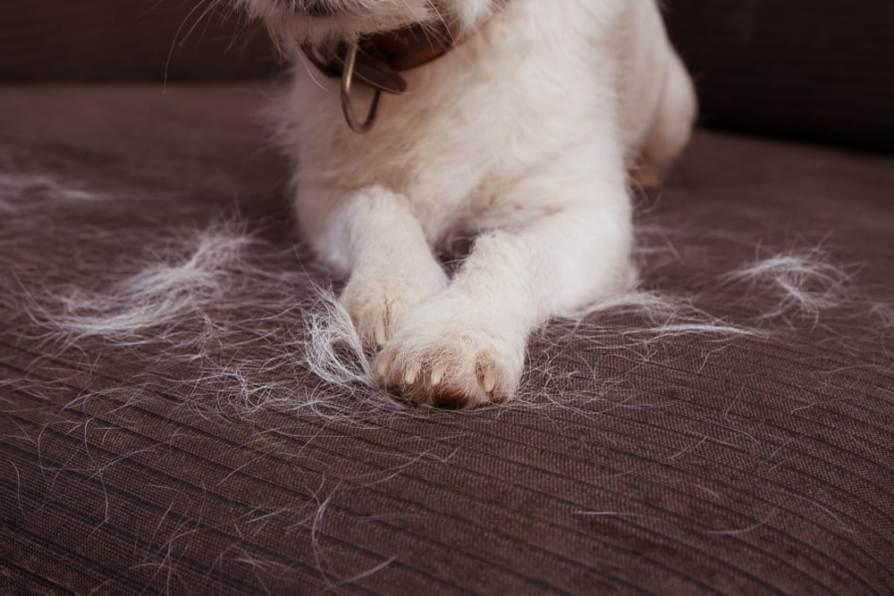 Dog Shedding - Causes and How to Stop It