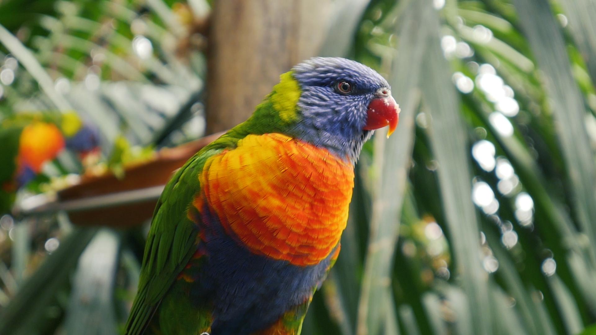 Loro Parque parrots