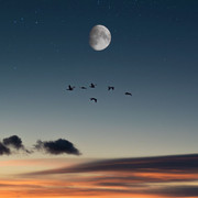 full-moon-birds-desert-138068-2048x1152
