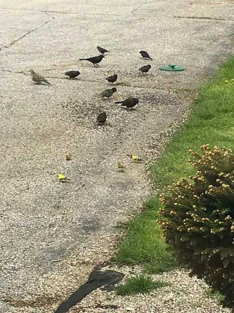 Birds-seed