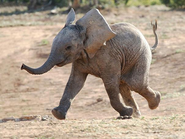 30 фотографий самых счастливых животных на планете-34