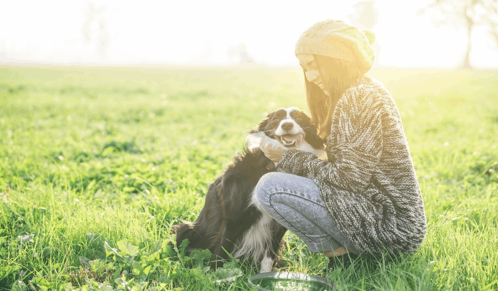 Taking Care Of Your Pet Insurance