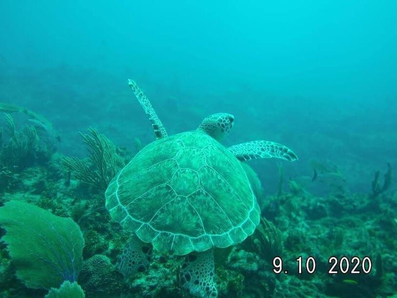 Punta Cana Scuba Diving