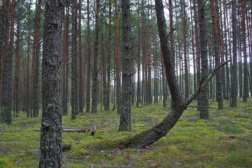 130819-woods-10