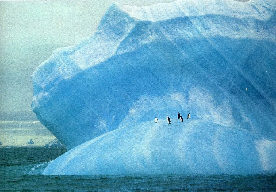 fotografii National Geographic 13
