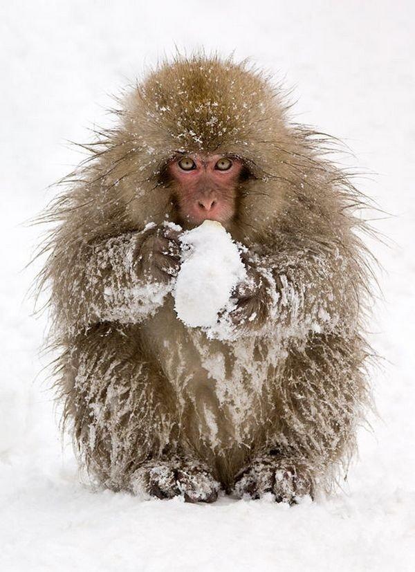 winter photographs 9
