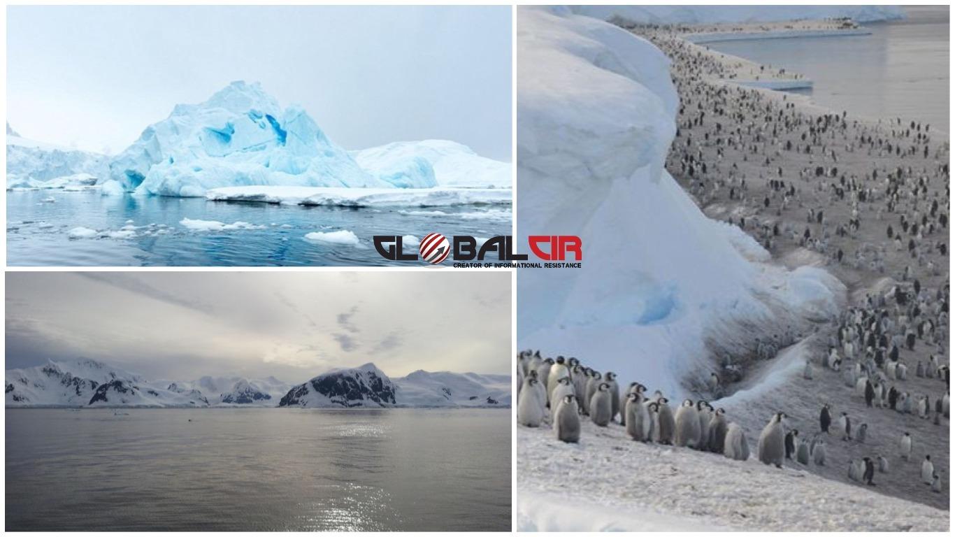 ANTARKTIKA I ARKTIK SU DVA POTPUNO SUPROTNA SVIJETA! Evo nekoliko činjenica o ovim ledenim prostranstvima koje će vam pokazati koliko se međusobno razlikuju!