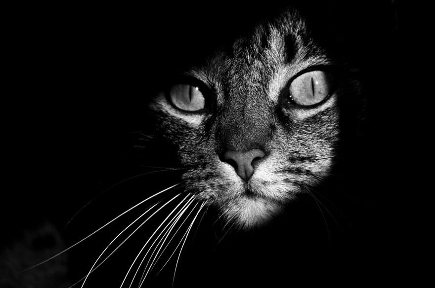 Таинственная кошачья жизнь в чёрно-белых фотографиях-4