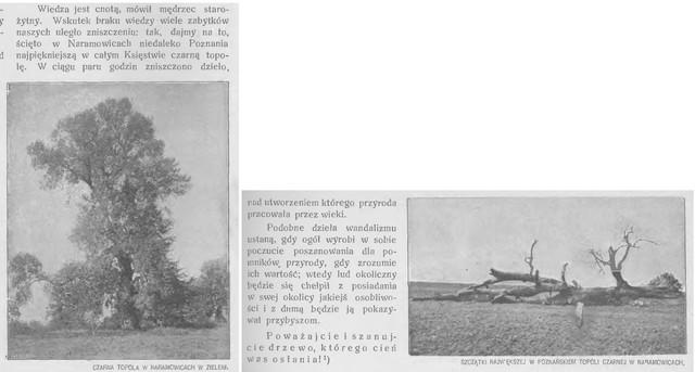 czarna-topola-Ziemia-nr7-1914.jpg