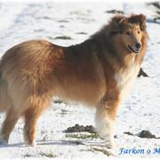 Farkon13-seitl-Schnee-2355