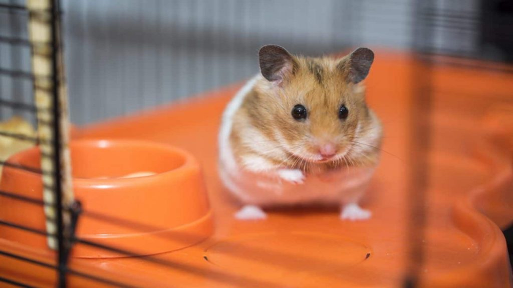 Hamster cages: which is the best of 2021?