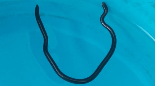 fer-snakes