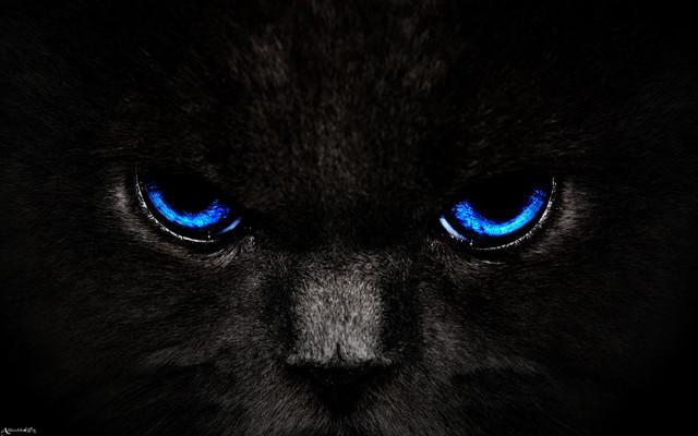 cat-eyes-blue-143433-3840x2400