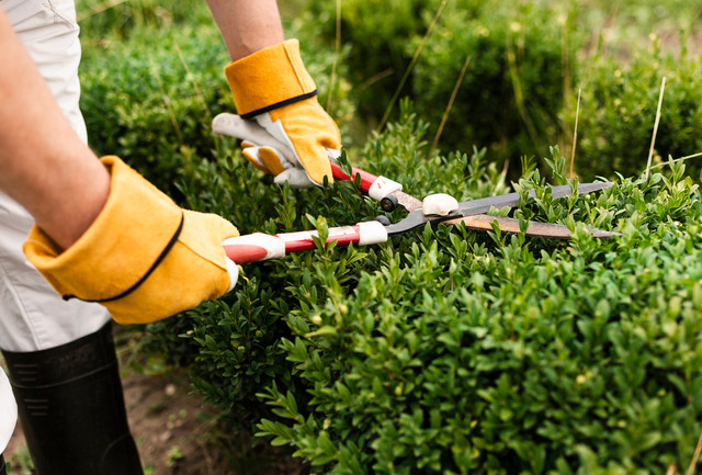 Recommended Tools for Home Gardening