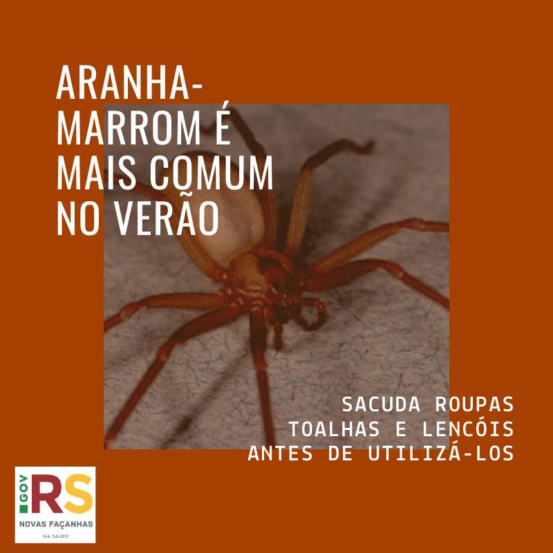 Aranha-marrom