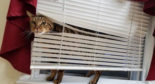 Кот в жалюзи