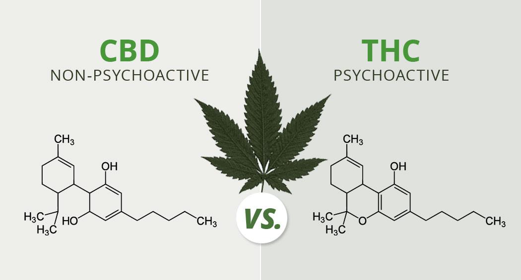 The-Subtle-Benefits-of-CBD-1