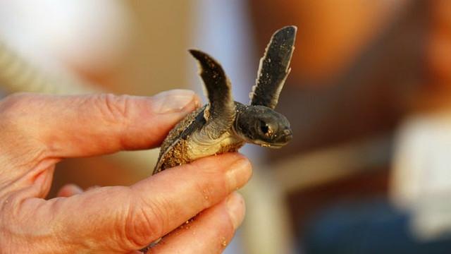 loggerhead-turtle-getty071319