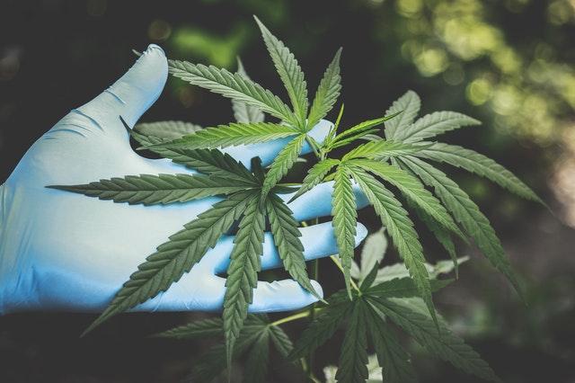 https://i.ibb.co/d49k4PZ/online-cannabis-products.jpg