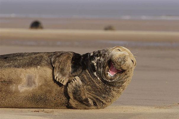 30 фотографий самых счастливых животных на планете-20