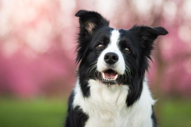 MDR1-Gene-In-Dogs-FT-1024x683.jpg