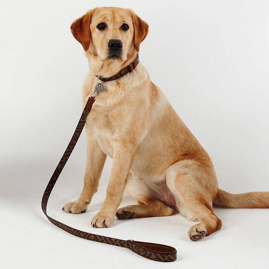 Fendi, la collezione di accessori per cani
