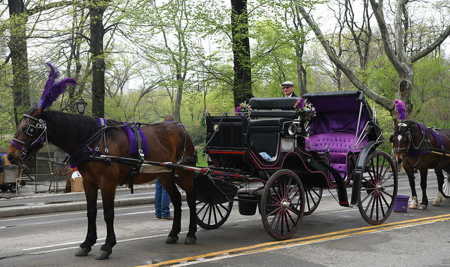Best Central Park Horse and Carriage Tours in NYC.jpg
