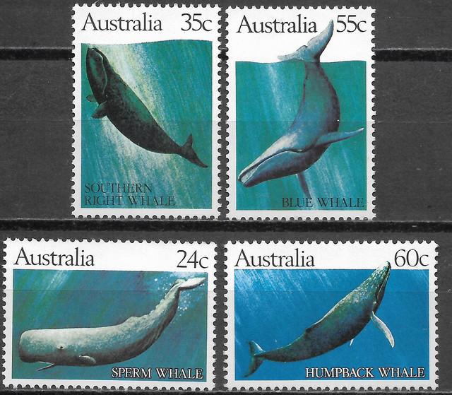 Wale-Australien-17-2-82