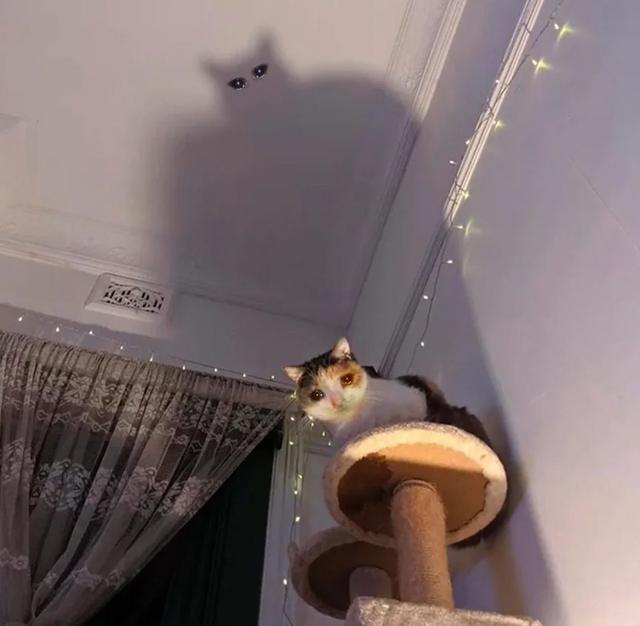 這隻貓的真實身份 Image