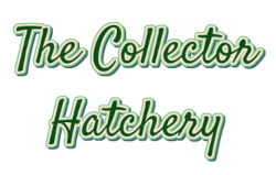 collectorhatcheraffiliate.png