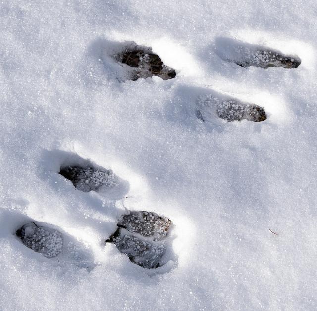 rabbit-tracks