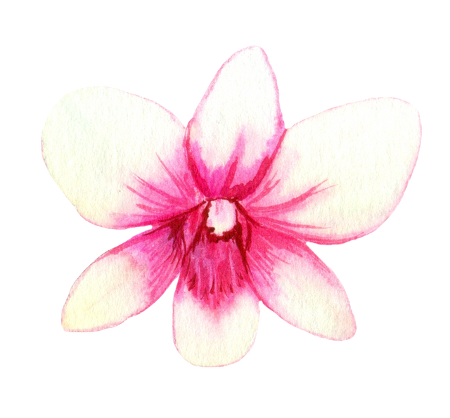 White-Pink-Orchid-1.png