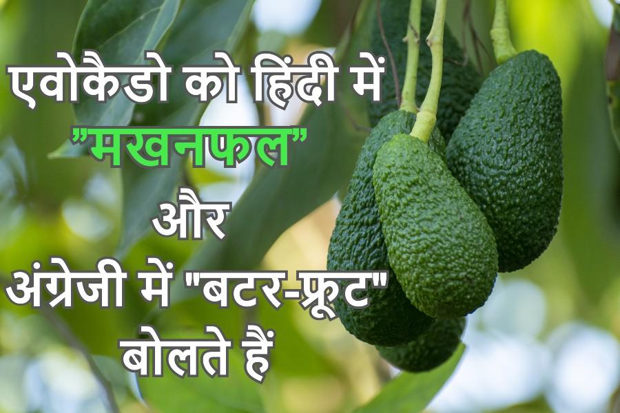 हिंदी में एवोकाडो का अर्थ क्या है