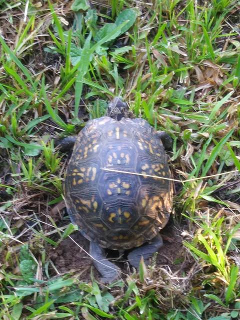 turtle-2019-3