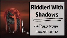 Riddled_With_Shadows.jpg