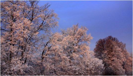 belo-ni-sneg-jurij-struna-blog
