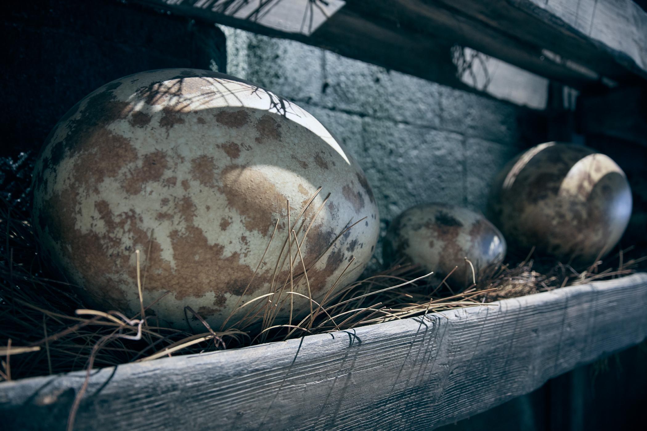 Egg Room